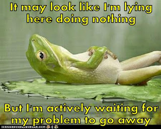 frog doing nothing