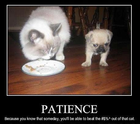 Time And Patience To Train Dog